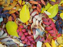 Autumn leaves. Yellow, green, brown, withered and not very autumn leaves underfoot royalty free stock image
