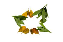 Autumn leaves yellow and green on a white background Royalty Free Stock Photos
