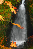 Autumn Leaves. Yellow autumn maple leaves hanging in the foreground in front of a romantic waterfall. Shepherds Glen waterfall in the Columbia River Gorge Oregon Stock Image