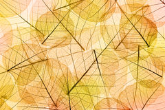 Autumn Leaves yellow and orange Background Stock Image