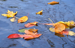 Autumn leaves yellow and red on the water Stock Image