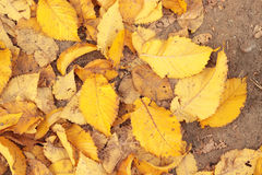 Autumn leaves. Yellow autumn leaves and sand Stock Photo