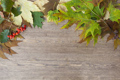 Autumn leaves yellowed wooden background close up Stock Image