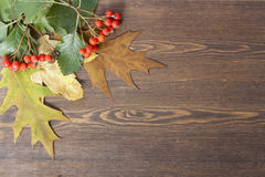 Autumn leaves yellowed wooden background close up Royalty Free Stock Photo