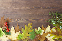 Autumn leaves yellowed wooden background close up Stock Images