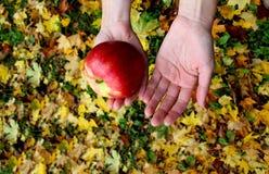 Autumn leaves zholtye hands apple coats woman stock image