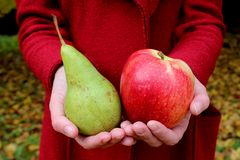 Autumn leaves zholtye hands red apple and green pear coats woman stock photos
