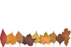Autumn Leaves-Zusammensetzung Stockfotografie