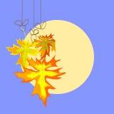 Autumn   leavse on moon background Royalty Free Stock Photography