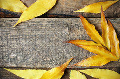 Autumn leeves background Royalty Free Stock Image