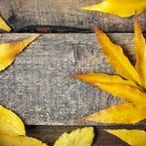 Autumn leeves background Stock Image