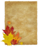 Autumn_Letter. Isolated Red, Yellow and Orange Maple leaves on Old Paper background Royalty Free Stock Photography