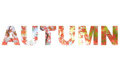 Autumn letter sign with photo background Stock Image
