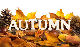 Autumn lettering on dry leaves, white copyspace Stock Photo