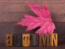 Autumn Lettering e folha Foto de Stock Royalty Free