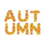 Autumn Lettering Feuilles de jaune d'ABC alphabet automnal Images libres de droits