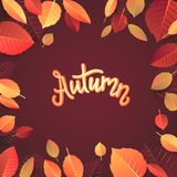 Autumn Lettering. Hand Written Typography on White Background. Vector Illustration for Your Design. royalty free stock photo