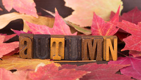 Autumn Lettering and Leaves Stock Image