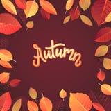 Autumn Lettering Tipografia escrita mão no fundo branco Ilustração do vetor para sua água fresca de design foto de stock royalty free