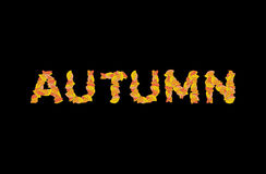 Autumn lettering. Yellow leaves of ABC. autumnal alphabet. Lette. Rs of fallen leaves Stock Photos