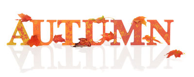 Autumn Letters With Leaves Royaltyfri Bild