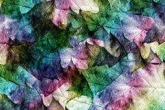 Autumn leves Stock Image