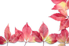 Autumn leves over white Royalty Free Stock Image