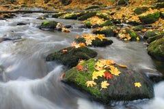autumn liście river obraz stock