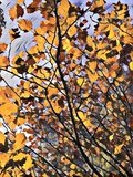 autumn liście tree zdjęcie royalty free