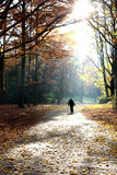 Autumn of life, Walking senior man. Autumn of life. Senior man walking with his back to the camera in forest, park Royalty Free Stock Images