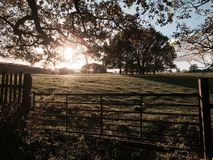 Autumn Light Royalty-vrije Stock Afbeeldingen