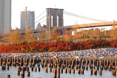 Autumn light on Brooklyn Bridge Park. Stock Photos
