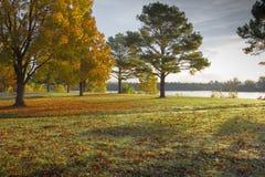 Autumn Light On Creek Bank Imagen de archivo libre de regalías