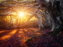 Autumn light Royalty Free Stock Photography