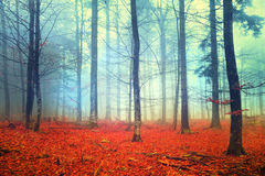 Autumn light forest scene Royalty Free Stock Photos