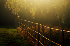 Autumn Light In haampstead london Royalty Free Stock Photography