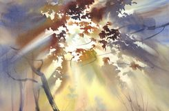 Free Autumn Light In The Forest Watercolor Landscape Stock Photography - 104686422