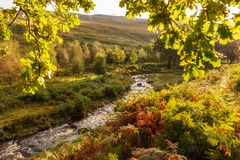 Autumn Light Stream Peak District Großbritannien Stockfoto