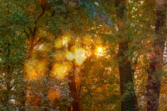 Autumn Light Symphony Royalty Free Stock Images