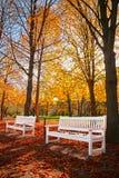 Autumn lights Stock Image
