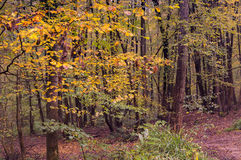 Autumn Lights Royalty Free Stock Photography
