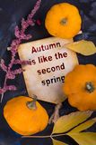 Autumn is like the second spring. Banner with pumpkin and autumn leaf and dried flower on black background royalty free stock photo