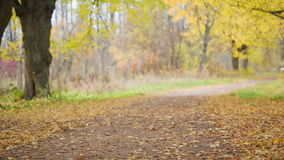 Autumn linden alley in town stock footage