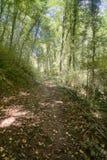 Autumn Linden-boombos op zonnige dag, byway van bos stock foto's