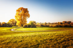 Autumn linden tree Stock Photography