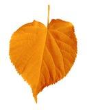 Autumn linden-tree leaf isolated on white Stock Photography