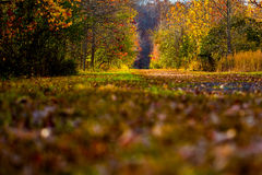 Autumn Lit Field Foto de Stock Royalty Free