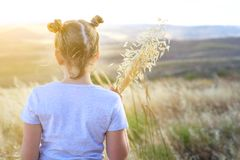 Beautiful girl holding spikes of wheat and ears of oats.Back view beautiful child on the autumn field ready for harvest. royalty free stock image