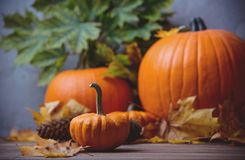Free Autumn Little Pumkin With Leaves Royalty Free Stock Photo - 100133095