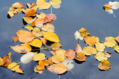 Autumn lives. In the water Stock Images